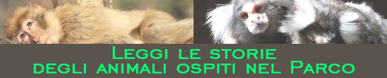ANIMALI storie