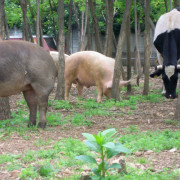 SANTUARI DI ANIMALI LIBERI: azione urgente